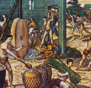 Native American and African slaves working in a Hispaniola sugar plantation. Theodore de Bry, America. part 5. Frankfurt, 1596