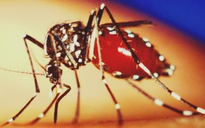 Three Zika Virus Cases Confirmed In Barbados