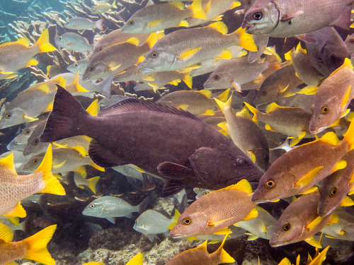 Reef fish in Belize.